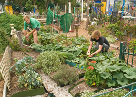 Community Gardens THUMBNAIL