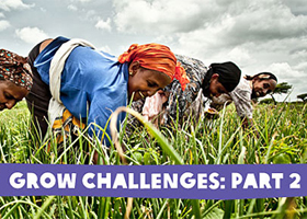 grow challenges part 2 feature image