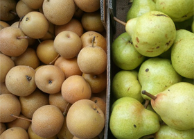 pears for oxfam