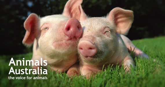 AnimalsAustralia_FoodWise Banner (1)
