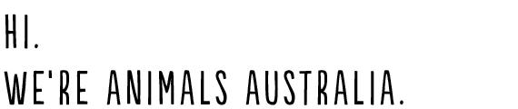 Hi Animals Australia