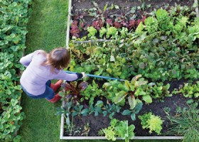 Gardening advice for the greenhorn.