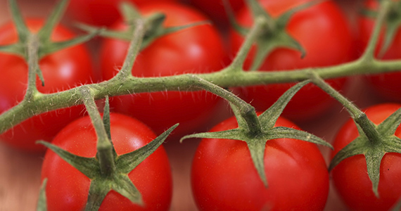 Home Grown Tomatoes Banner