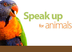 AA animal testing thumbnail